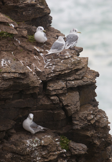 Uncovering the secrets of Arctic seabird colonies