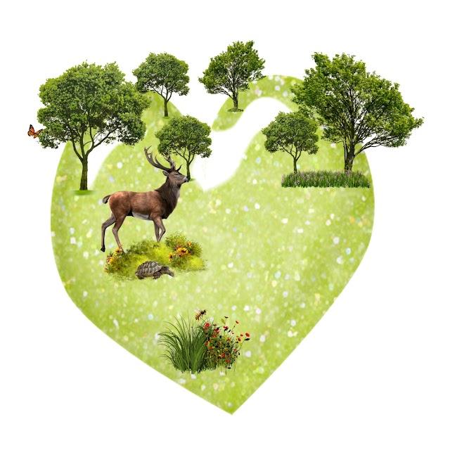 Yeşil Orman Okulu Ekim 2021 Bülteni