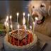 Γιορτάζοντας τα 15α γενέθλιά του...