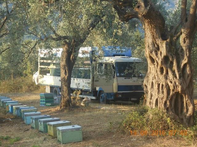 Νέα απο τα Πεύκα σε όλη την Ελλάδα: Μεγάλη ανατροπή για τους μελισσοκόμους!