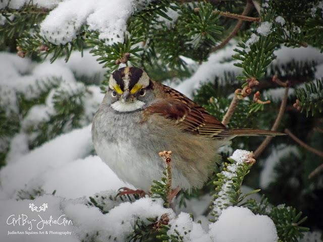 Bird Photos ArtByJudieAnn