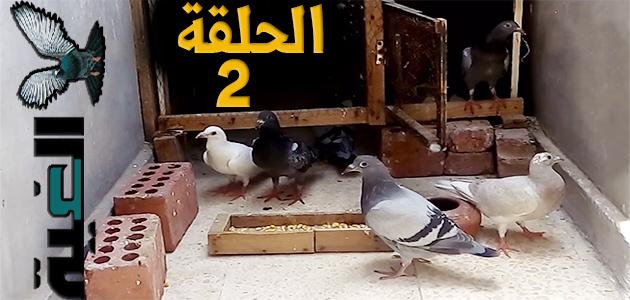 بالفيديو تعليم طريقة نش الحمام من البلكونة - الحلقة الثانية