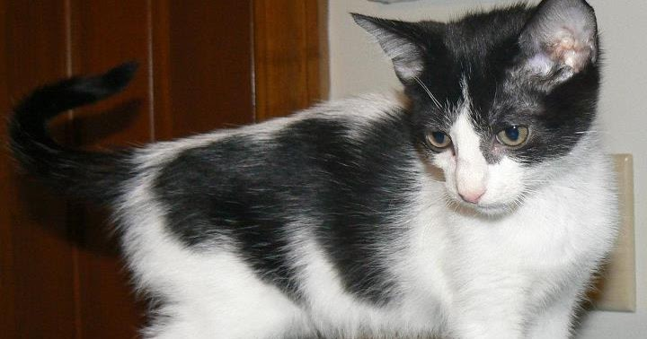 Alley Cats And Angels Of Nc Petsmart Knightdale Adoption