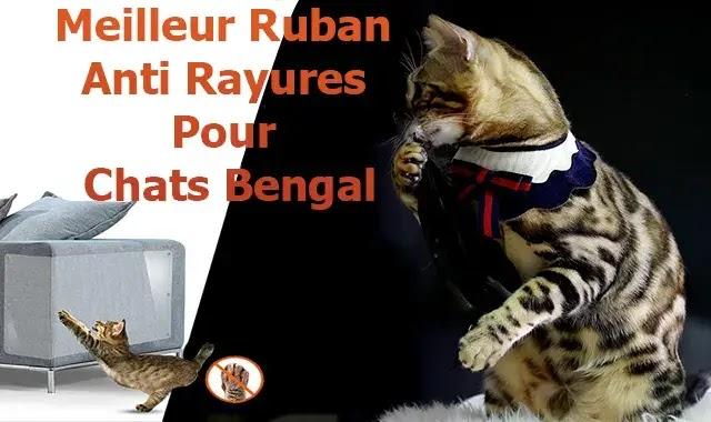Meilleur Ruban Anti Rayures Pour Chats Bengal