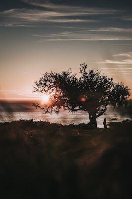 A silhouette of a person standing under a tree in front of the sunset