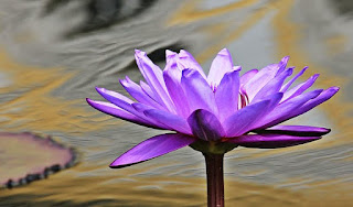 most beautiful pictures of flowers of the wor