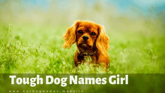 Tough Dog Names Girl