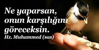 Ne yaparsan, onun karşılığını göreceksin, Hz. Muhammed, sas, serçe, elle besleme, kuş besleme