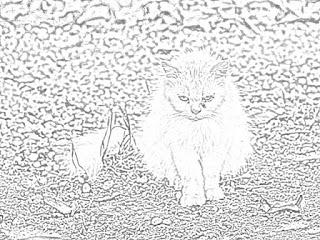 cats kittens holiday.filminspector.com