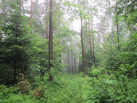 Leśne stoki Działu.