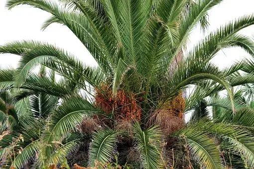 Kisah tentang pohon kurma lebat milik orang kaya yang kikir di zaman Rasulullah Saw.