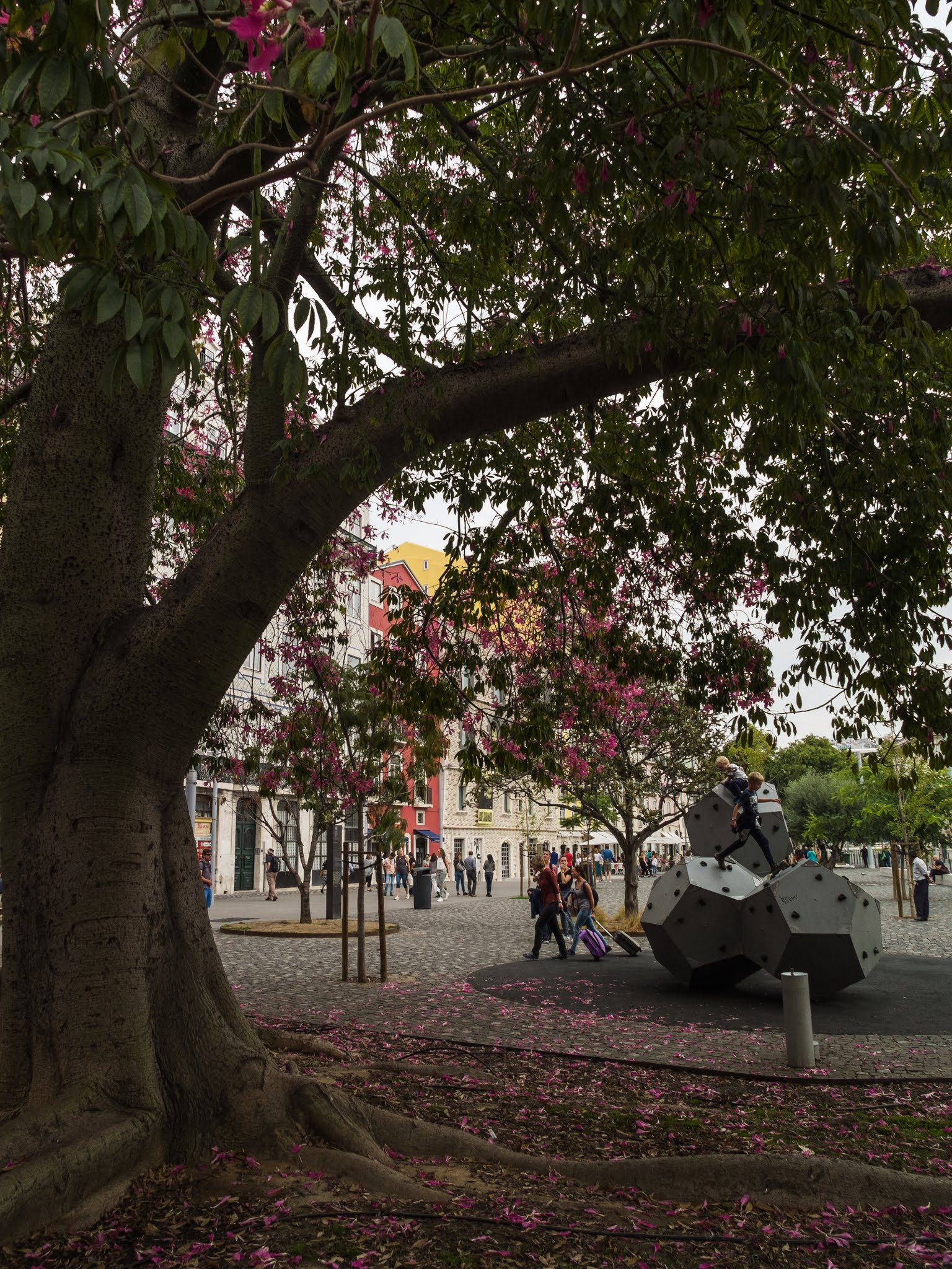 Roots and pink fallen petals under a flowering orchid tree in Lisbon, Portugal.