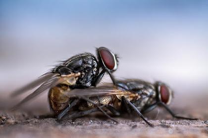Lalat Bikin Selera Makan Hilang, Ini Cara Ampuh Mengusir Lalat Menggunakan Bahan Alami