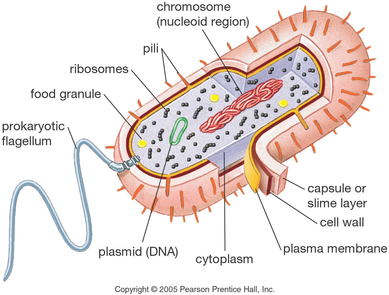 Diagram Of A Section Cell Membrane 6 Pin Horse Trailer Wiring Animal Model Project Parts Structure Labeled