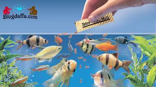 Perawatan Ikan Hias