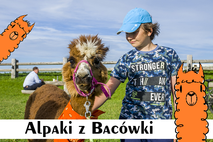 Poznajemy... Alpaki z Bacówki na Bukowinie