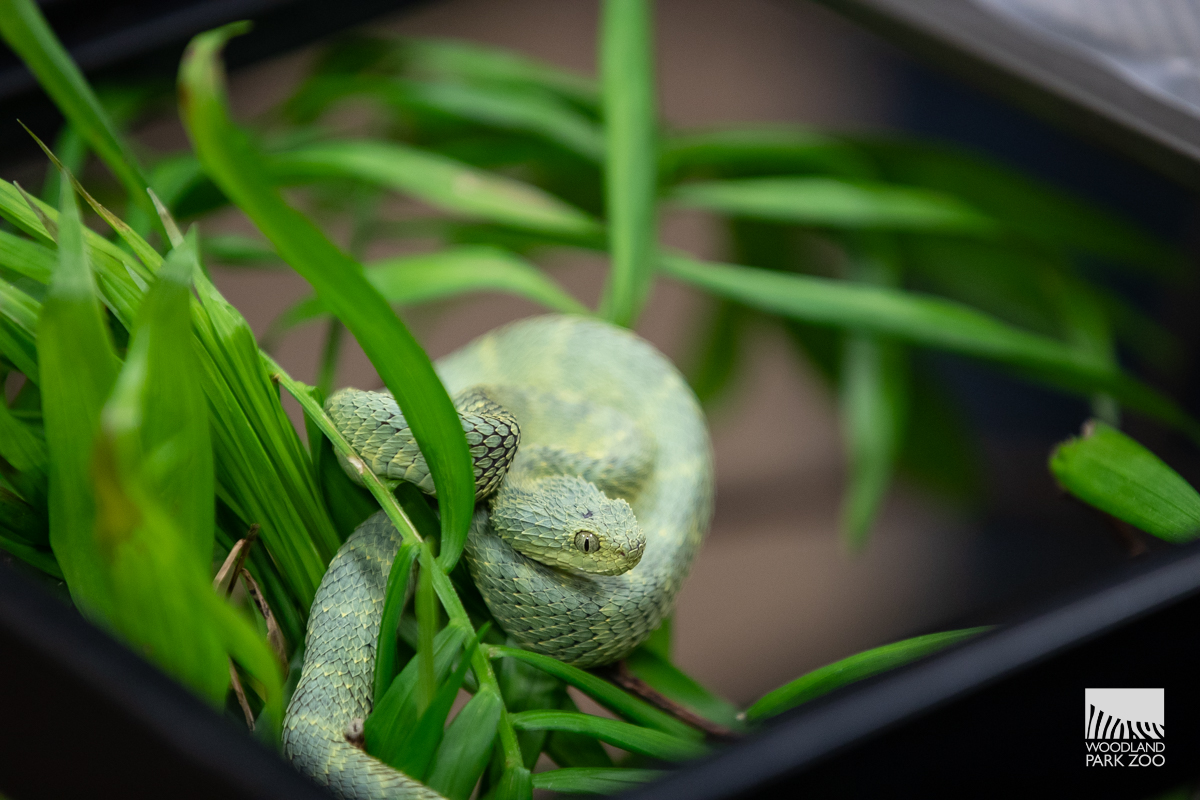 Snakes, spiders and reptiles find safe haven at Woodland ...