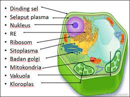 gambar bagian sel