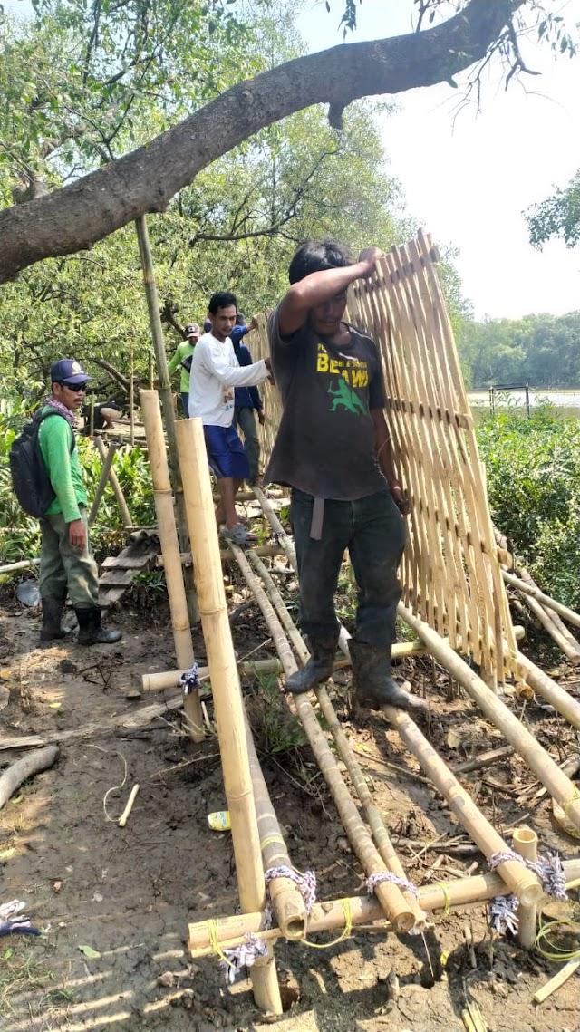 Kelompok Sadar Wisata (Pokdarwis) Alipbata Membangun Ekopariwisata Pesisir Muara Gembong Tanpa Bantuan Dari Pemerintah