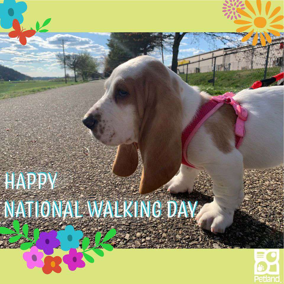 National Walking Day Wishes Awesome Images, Pictures, Photos, Wallpapers