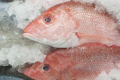 Cara Menghitung Kebutuhan Es Dalam Pengawetan Ikan