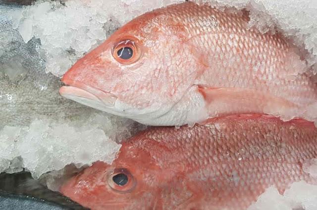 Jual Ikan segar online