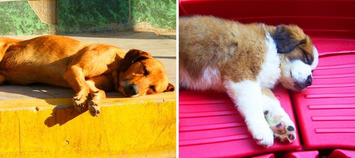 Know what the sleep position can say about your dog?