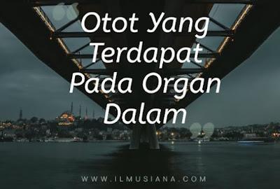 Otot Yang Terdapat Pada Organ Dalam