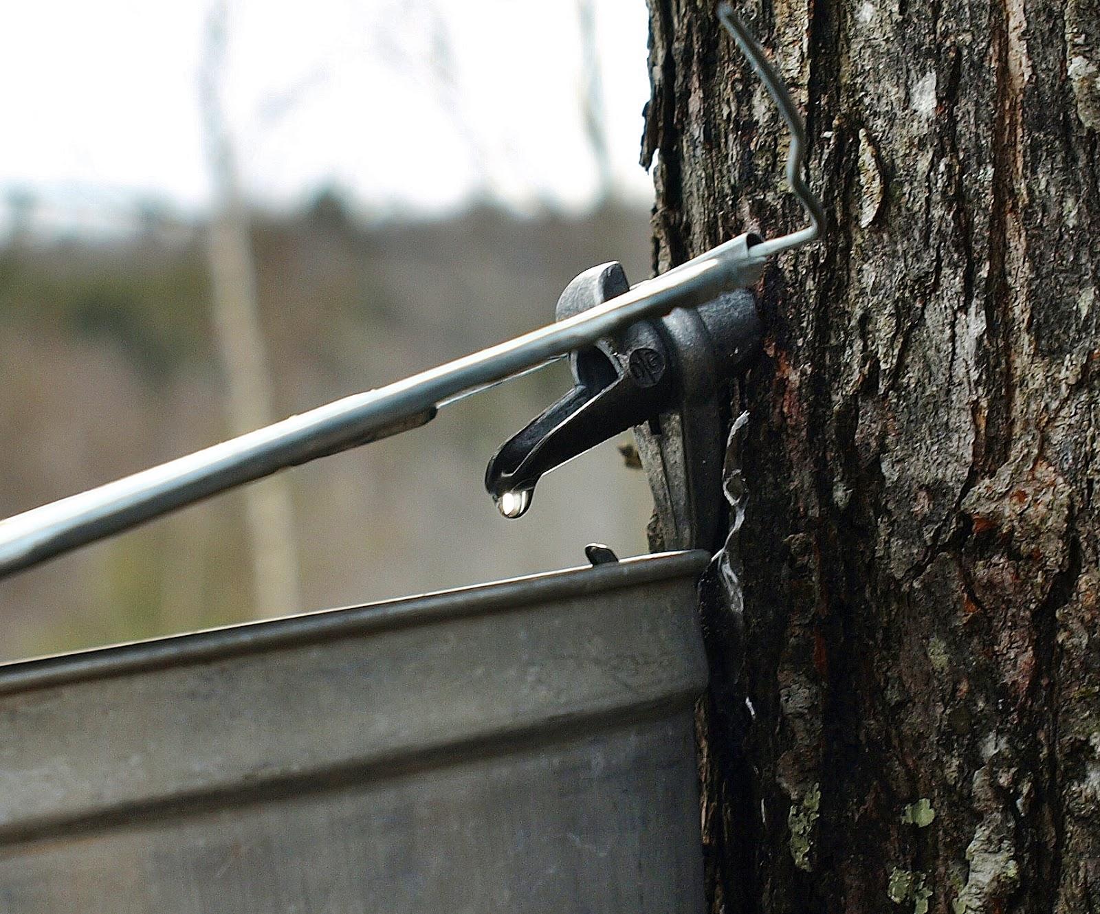 bottom of the pot a sweet secret tuckerman u0027s farm maple syrup