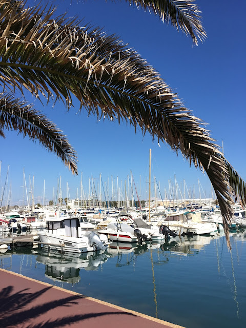 canet en roussillon, port, boats, palm trees,