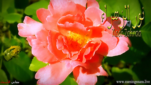 معنى اسم نور الزهراء وصفات حاملة هذا الإسم noor zahraa,