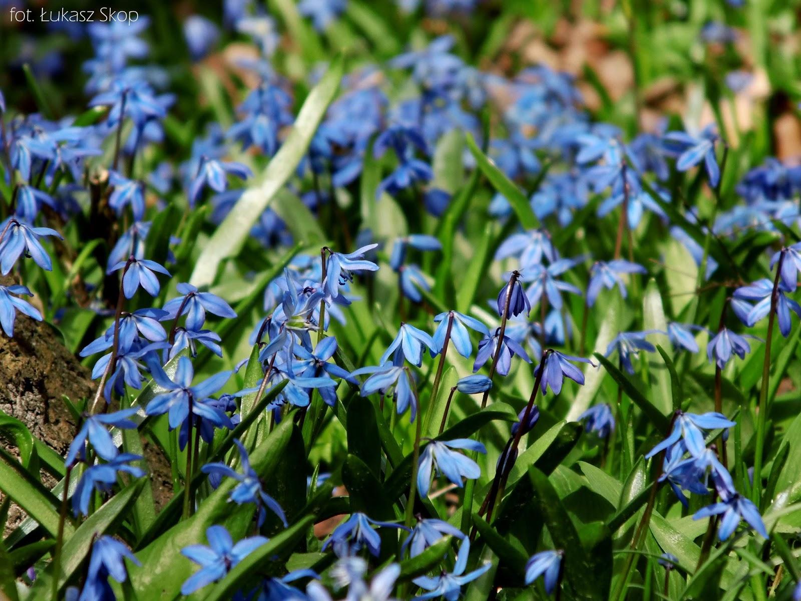 Niebieskie Kwiaty Polne Cięte Ogrodowe Bez Ogródek Blog