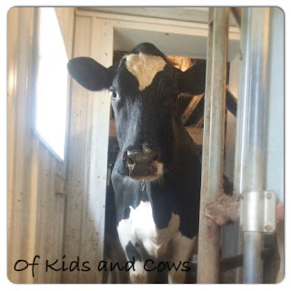 Country Fair Blog Party Blue Ribbon Winner: A Day in the Life of a Cow from Of Kids and Cows