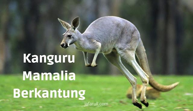 Hewan yang mendapatkan julukan mamalia berkantung adalah