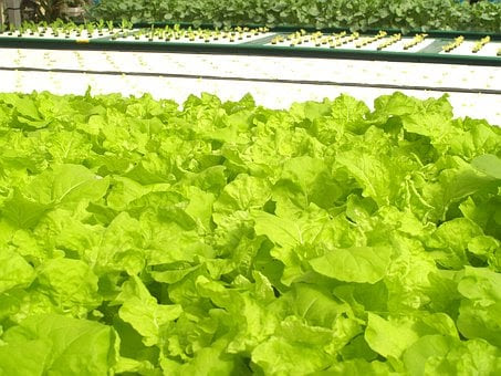 What are the different methods of doing hydroponic farming?