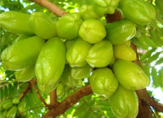Khasiat Belimbing Sayur