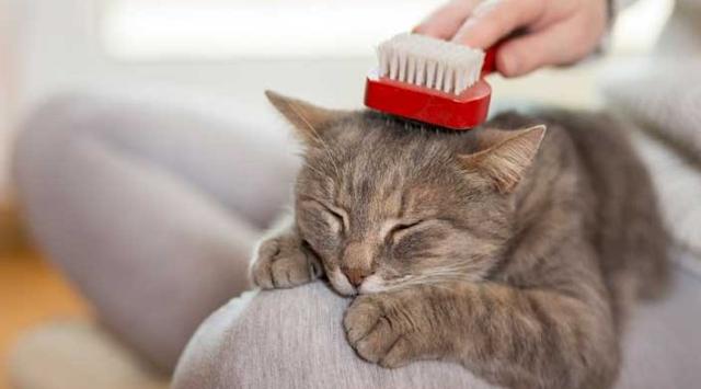 Cara Merawat Kucing Sesuai dengan Jenisnya