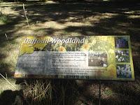Daffodil woodland, empty in February - Christchurch Botanic Gardens, New Zealand