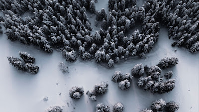 Forest, Snow, Aerial view, Winter