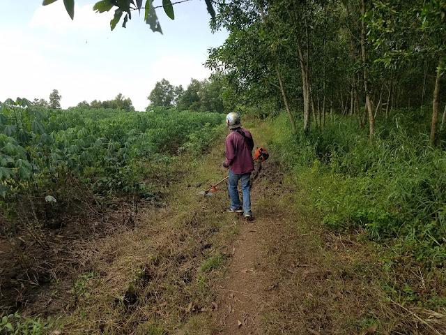 Cắt cỏ chuẩn bị đổ đá làm đường vào làng