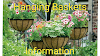 Hanging baskets-Types and plants to grow in them