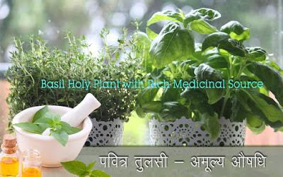 अमूल्य तुलसी, Health Benefits of Tulsi in Hindi, home remedies know benefits of tulsi in hindi, तुलसी के स्वास्थ्य लाभ, होली तुलसी लाभ, तुलसी के फायदे, tulsi ke fayde, tulsi ke labh, medicinal uses of tulsi, तुलसी औषधि, tulsi aushadhi