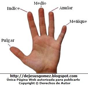 Imagen de los dedos de una mano con sus respectivos nombres. Foto de dedos de Jesus Gómez