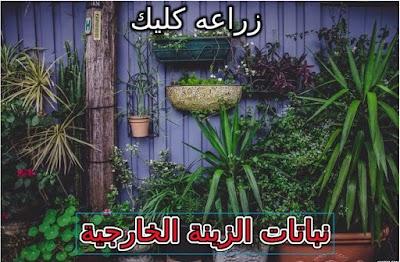 نباتات الزينة الخارجية