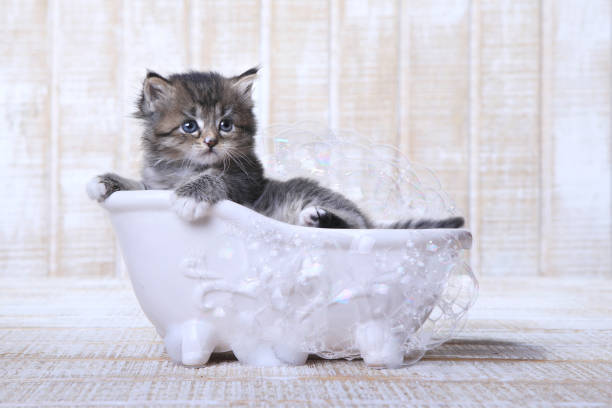 Bathing Your Kitten - Do I Need to Do It?