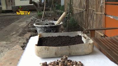 Media tanam berupa tanah dan pupuk kompos