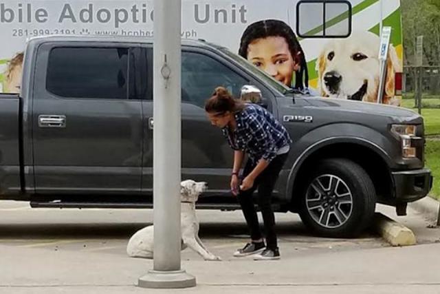 Собаки легли на асфальт, умоляя не отдавать их в приют для усыпления