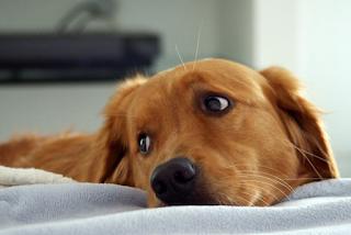 «'Η εγώ ή ο σκύλος» του είπε η γυναίκα του – Κι εκείνος διάλεξε... το σκύλο