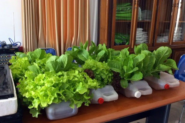 cara tanaman hidroponik di rumah