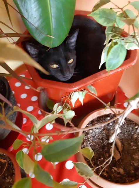 The Cat's Den